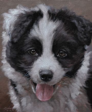 Lovely John Silver Original Oil Painting Portrait Of A Border Collie Dog